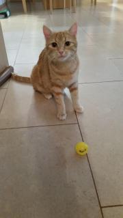 Katze vermisst, entlaufen