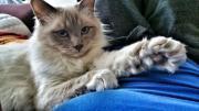 Katze vermisst Innerlaterns