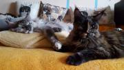 Katzenbetreuung mit viel
