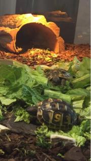 Landschildkröten Schildkröten