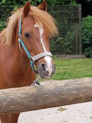 Liebes Kinder - Pony