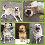 Lucy - unser Sonnenschein :