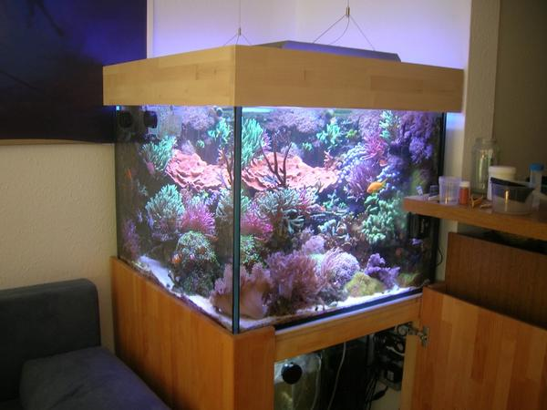 fische aquarium kaufen aquarium fische kaufen das quarant ne becken innenarchitektur k hles. Black Bedroom Furniture Sets. Home Design Ideas