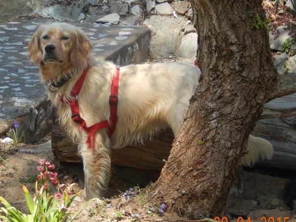 Mina, Hündin, geb. » Hunde