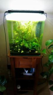 Nano-Becken Aquarium