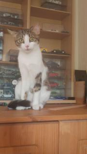 NIKA - quirliges Katzenmädchen