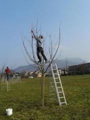 Obstbäume zu verkaufen