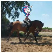 Pferd / Pony Wallach