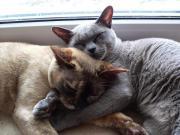 Problemkatzen suchen einen