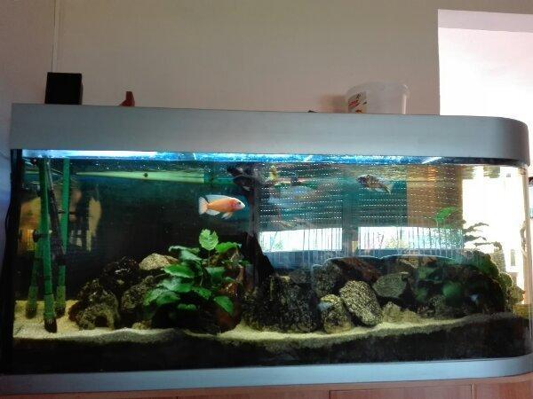 Raumteiler Aquarium 150cm X 50 X70