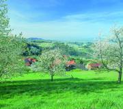 Reise Kirschblüte Schwarzwald -