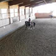 Reiterin sucht Pferd (