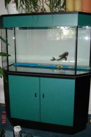 Sehr schönes Aquarium