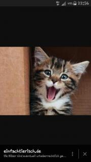 Suche Kätzchen