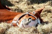 Suche liebes Pferd