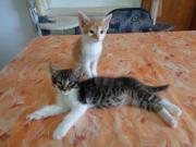 Süße Babykatzen / Katzenbabys