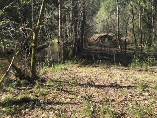 Waldgrundstück uriges waldgrundstück mit bachlauf in lemberg schrebergärten