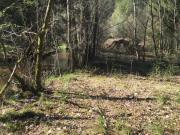 Uriges Waldgrundstück mit