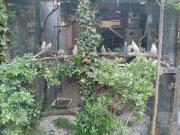 Vogelunterkunft Auffang Asyl