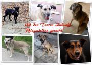 Wirals Tierschutzverein suchen