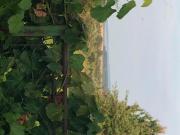 Wohlfühllage inklusiv Panorama-