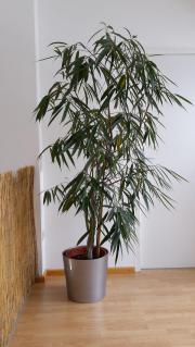 pflegeleichte zimmerpflanzen pflanzen garten. Black Bedroom Furniture Sets. Home Design Ideas